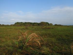 IMG 3451 - Natuurwandeling iSimangaliso Wetlands NP