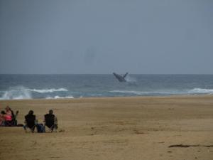 IMG 3525 - Springende walvis bij Cape Vidal