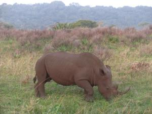 IMG 3546 - Witte neushoorn iSimangaliso Wetlands Park