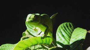 P1010404 - Kameleon iSimangaliso Wetlands Park, Foto Nicole