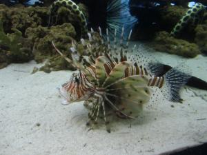 IMG 3665 - Two Oceans Aquarium Kaapstad