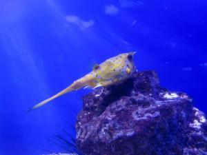 IMG 3667 - Koe-vis Two Oceans Aquarium Kaapstad